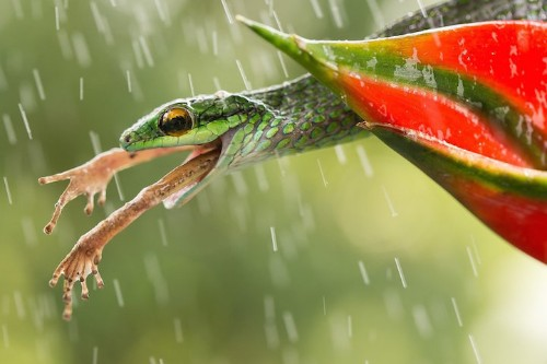 20 Finalists of the Smithsonian Photo Contest Show Earth's Awesome Beauty