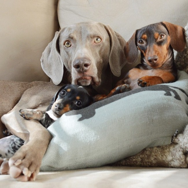 New Puppy Joins in Adorable Duo Harlow and Indiana's Daily Cuddles
