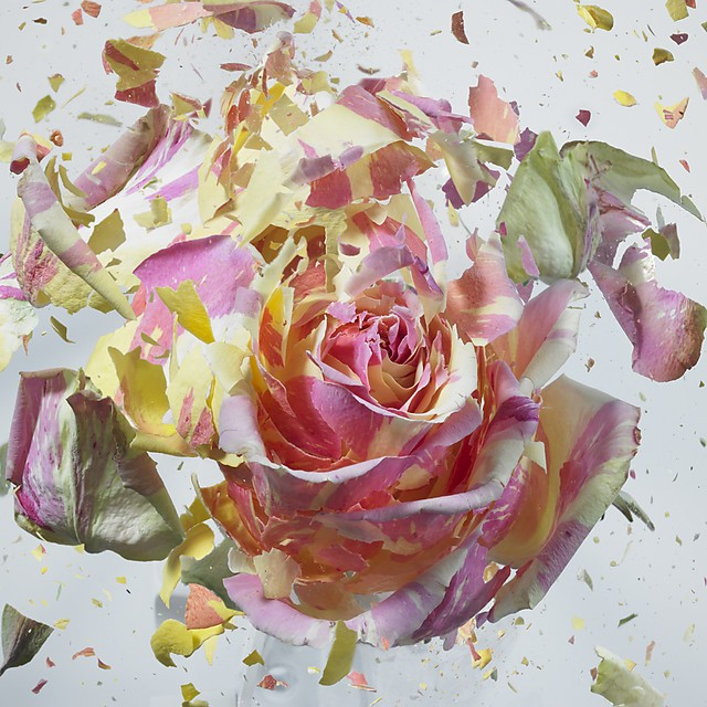 Chaotic Beauty of Flower Explosions by Martin Klimas