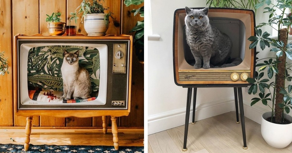 People Are Transforming Vintage TVs Into Cozy Cat Beds for Their Feline Friends