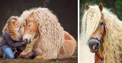 "Meet Storm, the ""Rapunzel of Horses"" with Luscious Blonde Hair"