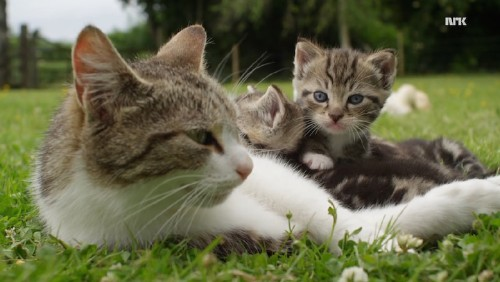 Mother Cat Adopted Three Orphaned Ducklings, Raised Them as Her Own