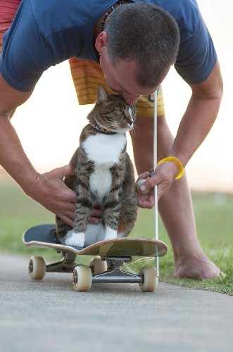 Adorable Cat Pulls Off Awesome Skateboard Moves