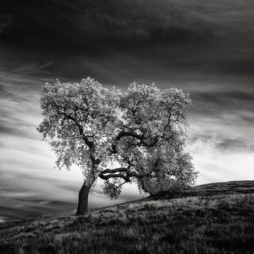 Infrared Camera Captures the Poetically Desolate Landscapes of Northern California