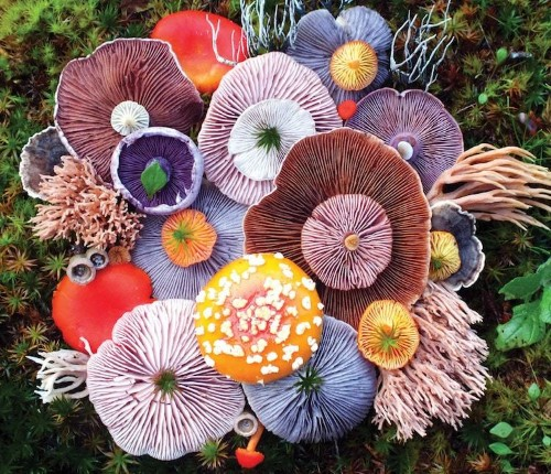 Mushrooms Star in Unexpectedly Colorful Nature Photography Series