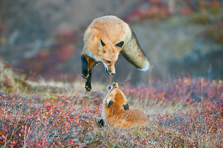 Outstanding Entries to the Smithsonian Wilderness Forever Photo Contest