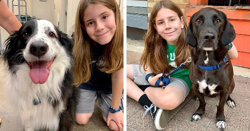 11-Year-Old Boy Documents Every Dog He's Ever Petted on Twitter