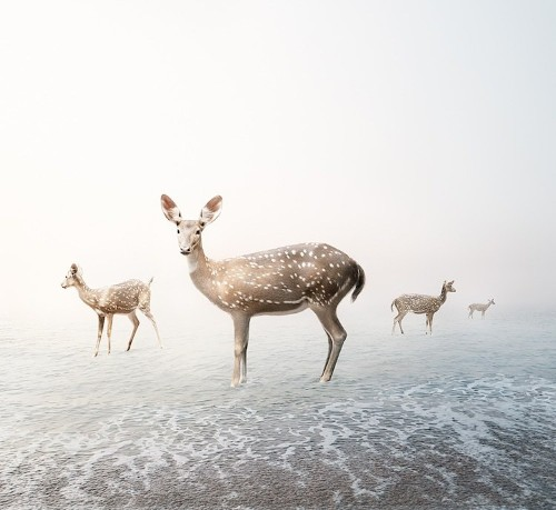 Meditative Montages of Wild Animals in Serene Settings