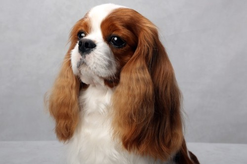 Awesome Portraits of Westminster's Best of Breed