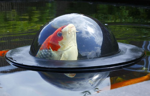 Floating Observation Dome Gives Koi Fish a Scenic View of the Outside World