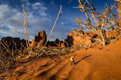 Miniature Adventures in a Southwestern Landscape