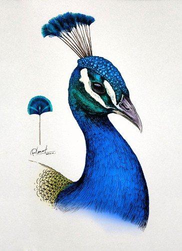 Intricate Animal Illustrations Burst with Color and Life