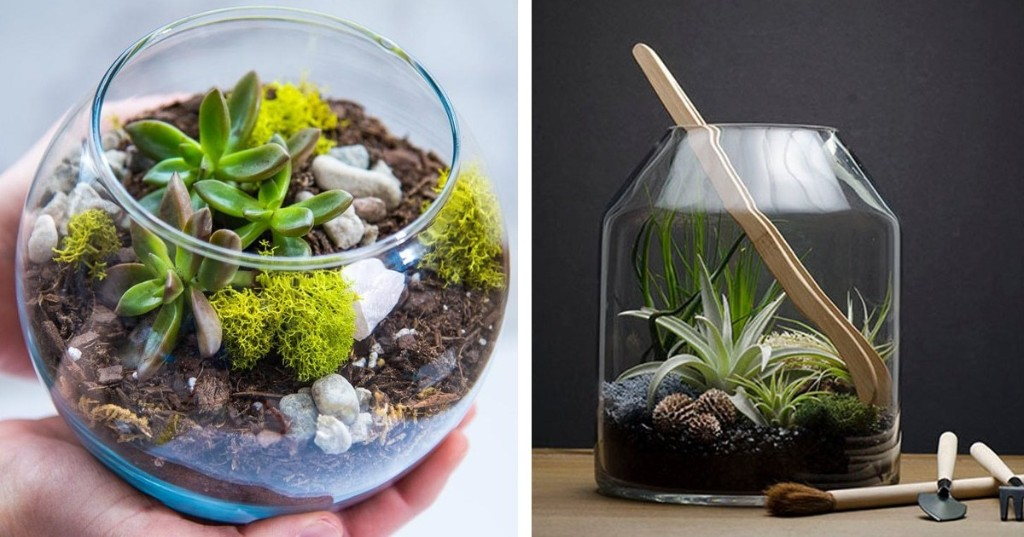 15 Terrarium Kits That Have Everything You Need To Bring Some Green Into Your Home