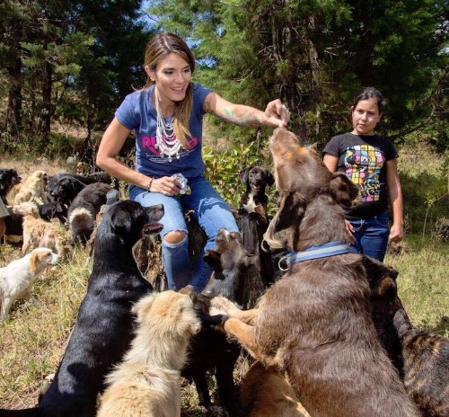 """Over 900 Rescued Dogs Roam Freely on Costa Rica's """"Land of the Strays"""""""