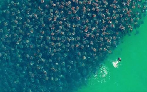 12 Amazing Photos of Animals Congregating