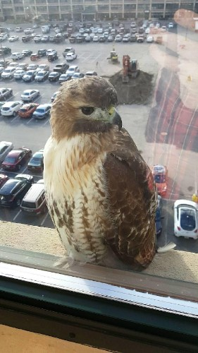 "People Are Snapping Pictures of Unusual Bird Friends Saying ""Hello"" at Their Windows"