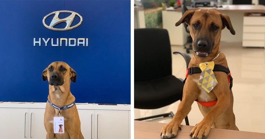 """Stray Dog Visits Hyundai Dealership Every Day, Gets """"Hired"""" as Mascot"""