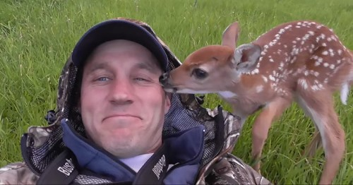 Rescued Fawn Refuses to Leave the Man Who Rehabilitated Her