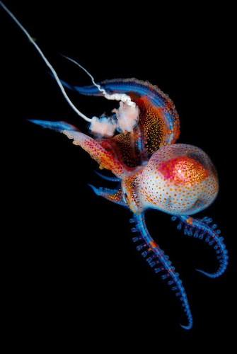 Captivating Portraits of Luminous Underwater Creatures