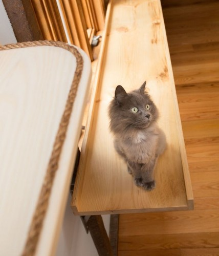 """Designer """"Catifies"""" a Human Home into a Playful Haven for Seven Felines"""