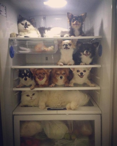 Adorable Hamster Is the Newest Cuddle Buddy for Family of 8 Dogs and a Cat