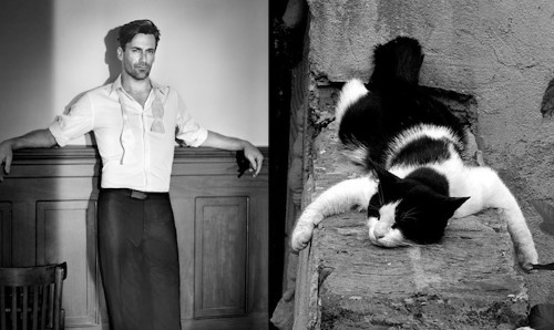 Hilarious Blog Continues to Pair Sexy Men with Adorable Cats in Similar Poses