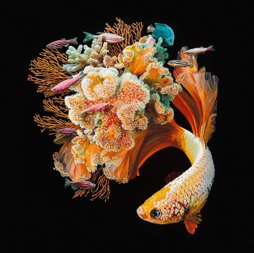 Vibrant Paintings of Colorful Fish Merged With Their Coral Environments