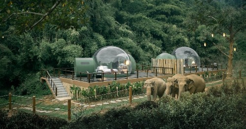 'Jungle Bubbles' Let Guests Sleep Amongst Free Roaming Elephants in Thailand