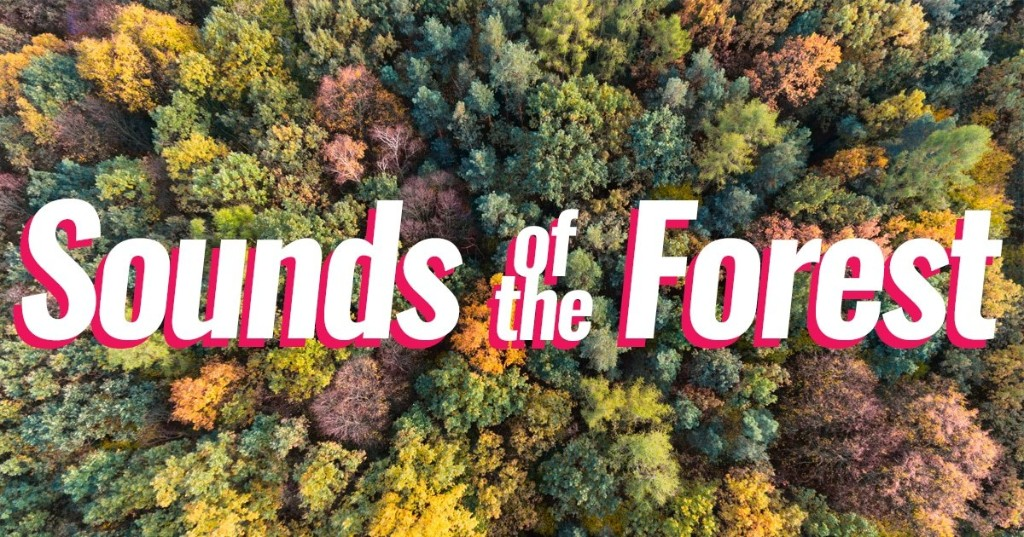 "Free Audio Library Features ""Sounds of the Forest"" From Around the World"