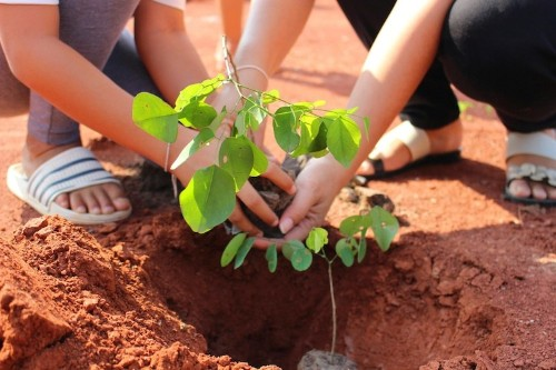 Ethiopia Planted 350 Million Trees in Just 12 Hours