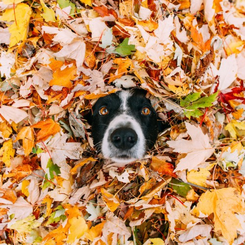 Interview: Help Photographer Andrew Knapp Find His Hiding Border Collie Momo