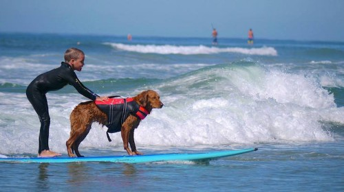 Inspirational Therapy Dog Surfs with People with Disabilities to Provide Healing and Hope