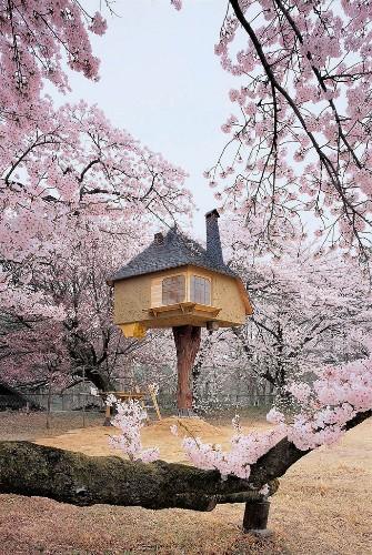 Fairy-tale Treehouse Hovers Amid Cherry Blossom Trees