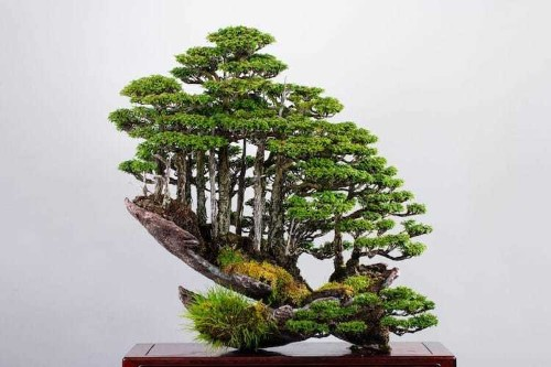 Bonsai Master Masahiko Kimura Creates Gravity-Defying Mini Forests
