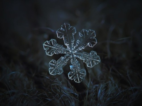 Beautiful Macro Photos of Snowflakes as Free Wallpapers