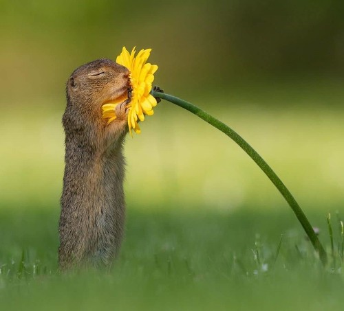Photographer Captures Adorable Moment Squirrel Takes in Sweet Smell of Flower