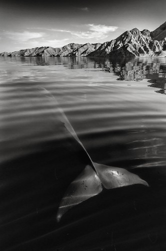 Interview: Photographer Christopher Swann Captures Images of Whales and Dolphins in All Their Glory