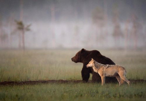 Photographer Documents the Beautifully Uncommon Friendship Between a Wolf and a Bear