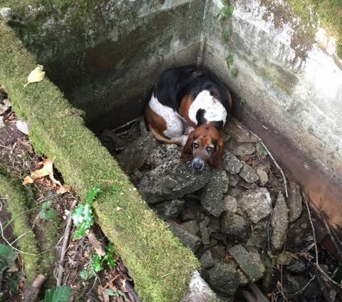 Loyal Dog Stood by Trapped Friend for a Whole Week Until She Was Rescued