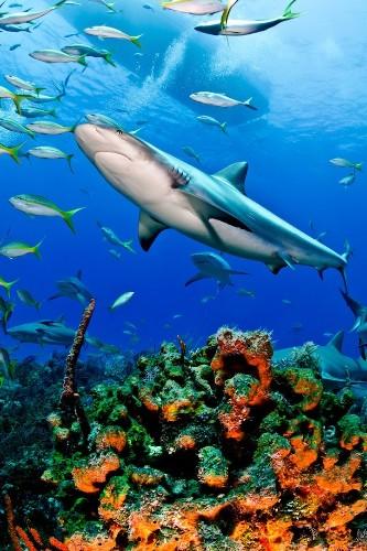 MMM Exclusive Interview: Shark Photographer Todd Bretl