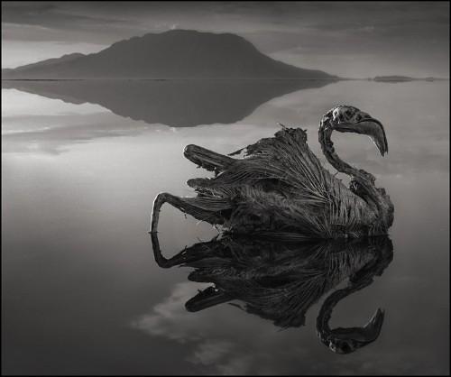 Africa's Lake Natron Turns Animals Into Stone