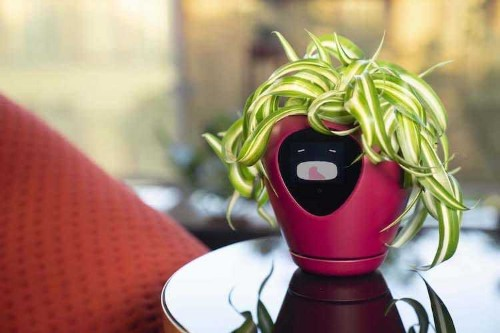 Smart Planter Transforms Your Houseplant into a Virtual Pet