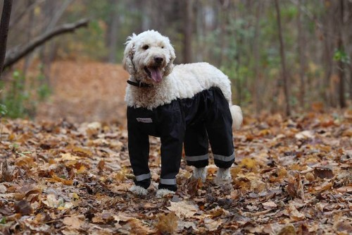 """New """"Dog Pants"""" Trend Keeps Your Furry Friend Clean and Warm During Their Outdoor Adventures"""