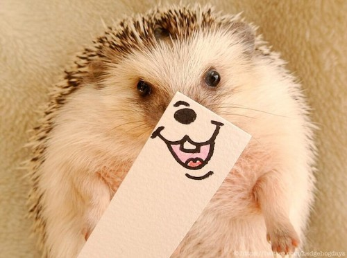 Adorable Hedgehog Humorously Disguised with Illustrated Masks