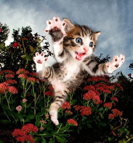 Adorable Rescue Cats and Kittens Hilariously Captured in Mid-Pounce