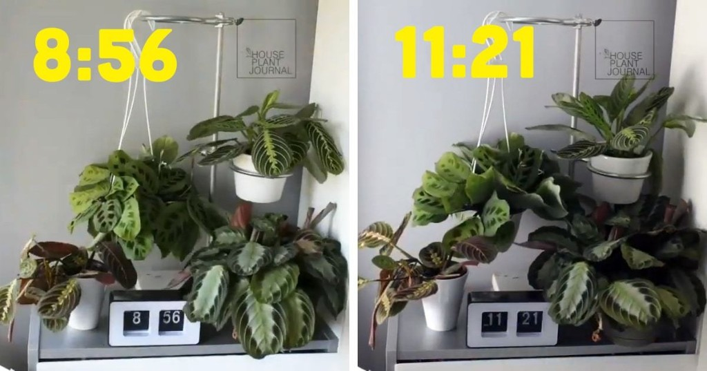 Mesmerizing Time-Lapse Videos Show How Much Plants Move During a Day
