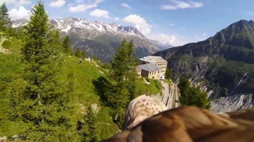 Camera Strapped to Soaring Eagle Provides Captivating POV