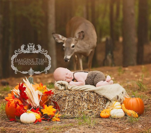 Curious Deer Photobombs Baby's Photoshoot and Turns It into a Magical Portrait