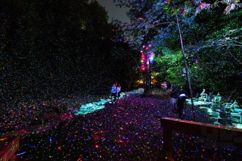 Nocturnal Trail Through Illuminated Forest Becomes Magically Immersive Experience