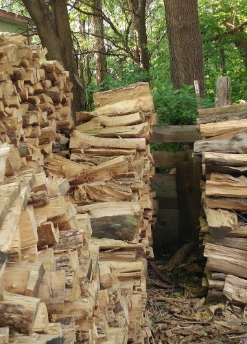 Can You Spot the Cat Hidden in This Photo of Stacked Logs?